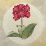 病忘れの花