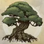 千年樹の幼木