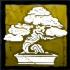 杜松の盆栽の画像