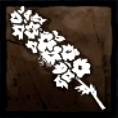 思い出の花の画像