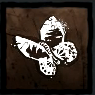 死んだ蝶の画像