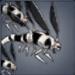 翅刃虫のアイコン
