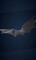 バットグライダーの画像
