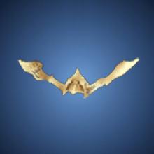 猟犬の金角のイラスト
