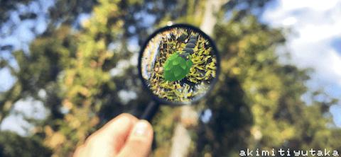 ミノムッチ(くさきのミノ)のAR画像