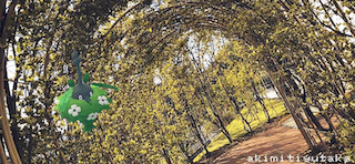 ミノマダム(くさきのミノ)のAR画像
