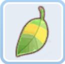 タヌキ木の葉