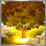大義の聖木
