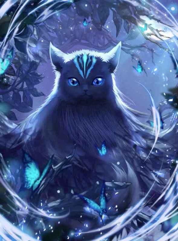 先見の猫イルア画像