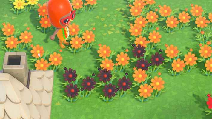 オレンジを交配
