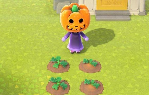 かぼちゃなえ