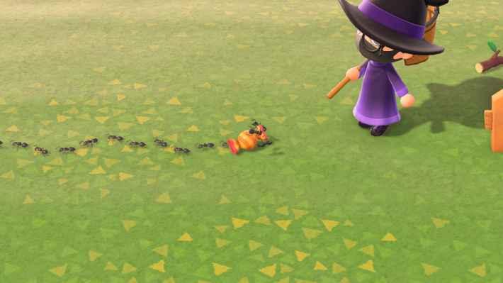 アメにたかるアリ