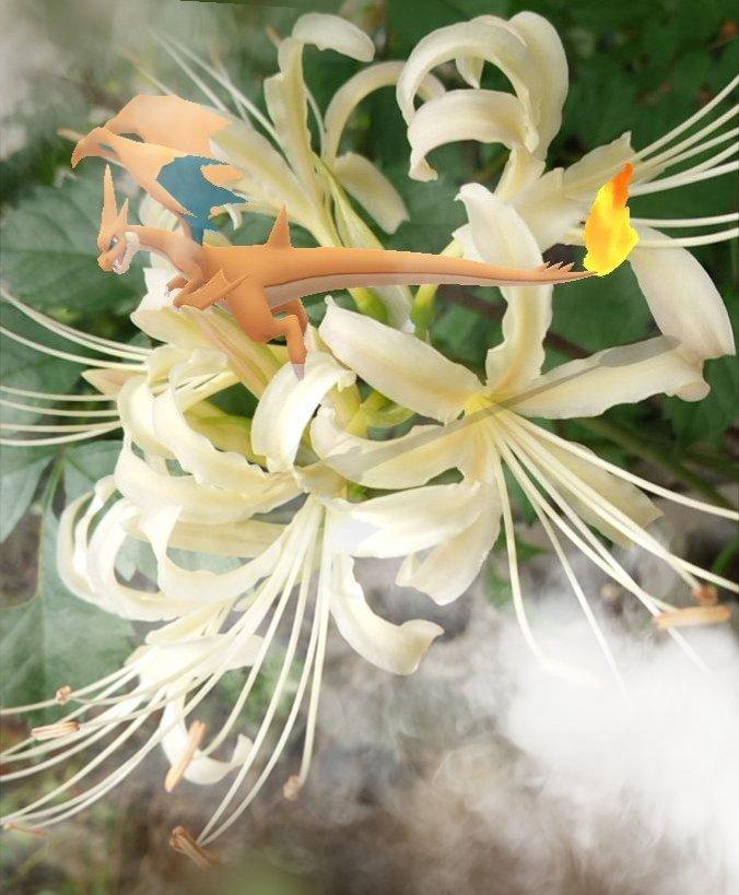 白い彼岸花とメガリザードンY
