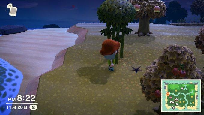 森 たけのこ 植える 場所 あつ